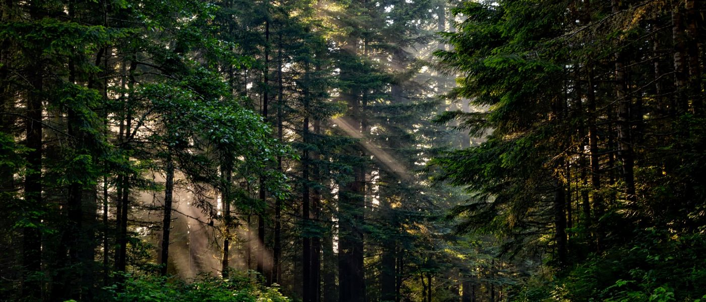 forest-1598756_1920-1400x600