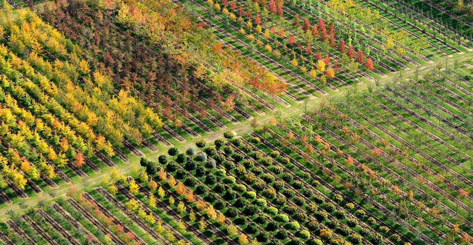 Aerial view, tree nursery, Beckedorf, Lower Saxony, Germany
