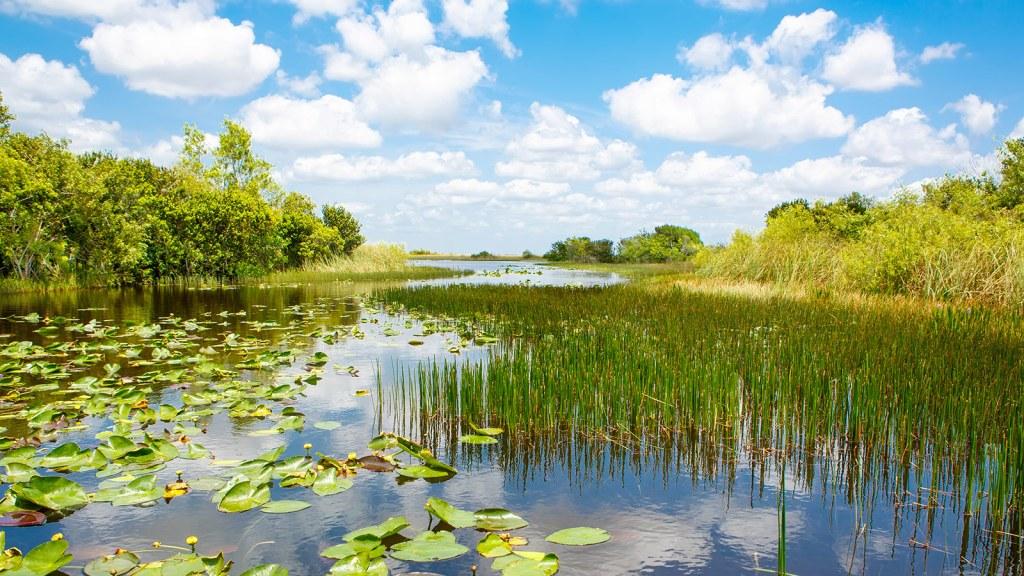 florida-wetlands