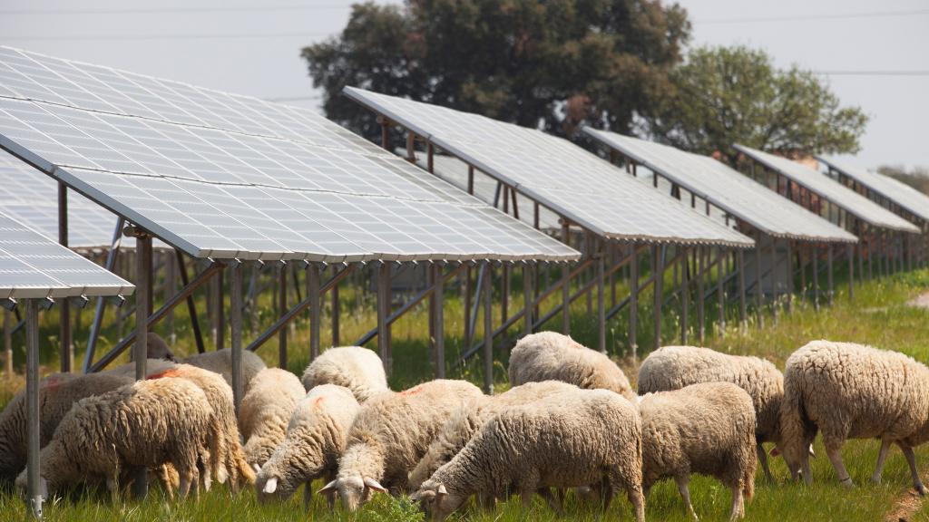 Solar Panels. Solar Power Plant. Area of Vulci. Province of Viterbo. Lazio. Italy. Europe